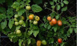 تاثیر pH خاک بر رشد گیاه