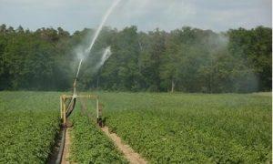 تاثیر آبیاری بر pH خاک